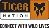 Tiger Nation Logo